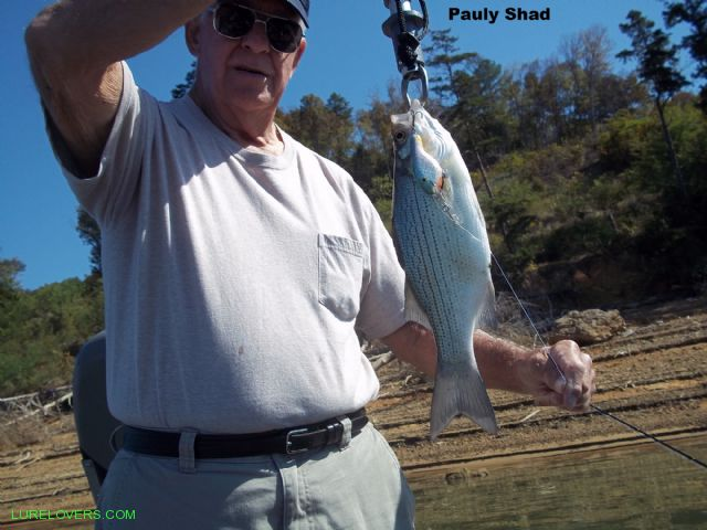 More pictures of grumpy old men lurelovers australian for Grumpy s fishing report